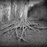 Roots (Five Minute Friday)
