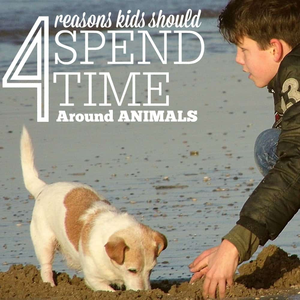 Why Our Kids Should Spend Time Around Animals