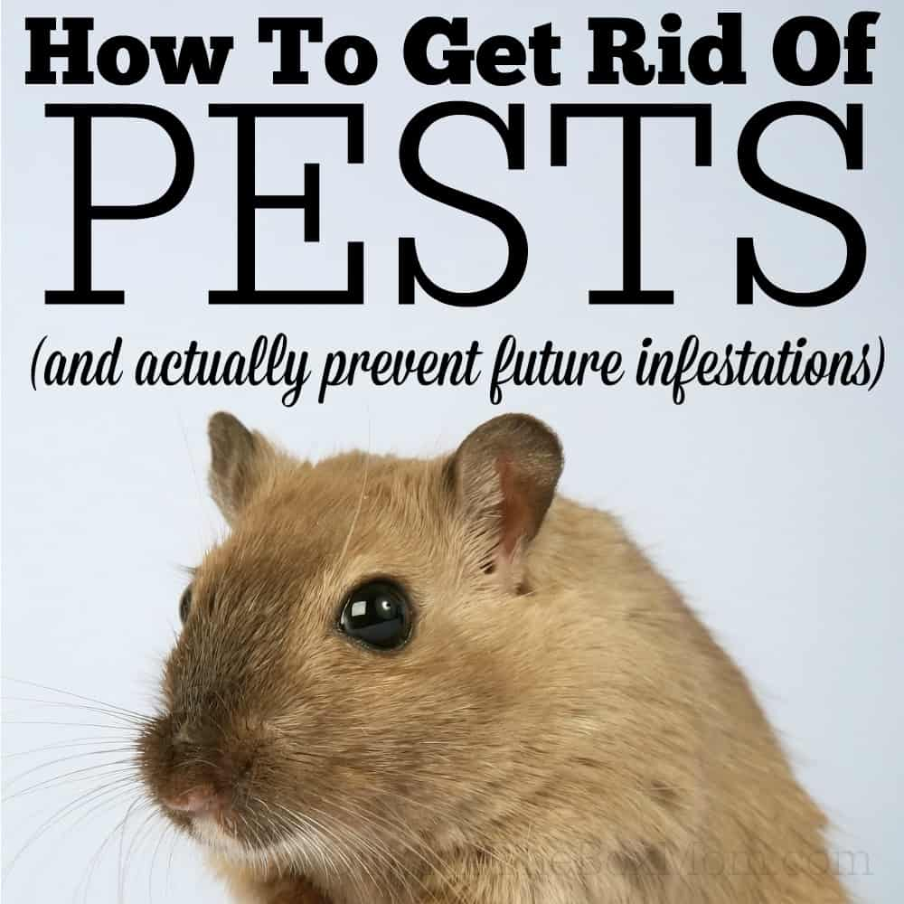 How To Get Rid Of Pests And Actually Prevent Future Infestations