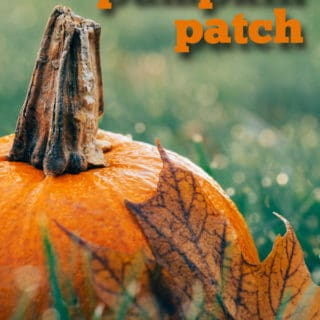 tips for visiting the pumpkin patch   pumpkin patch