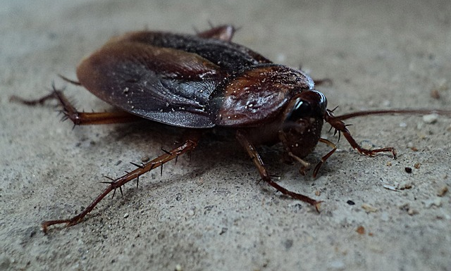 Effective Ways of Getting Rid of Cockroaches from Your House