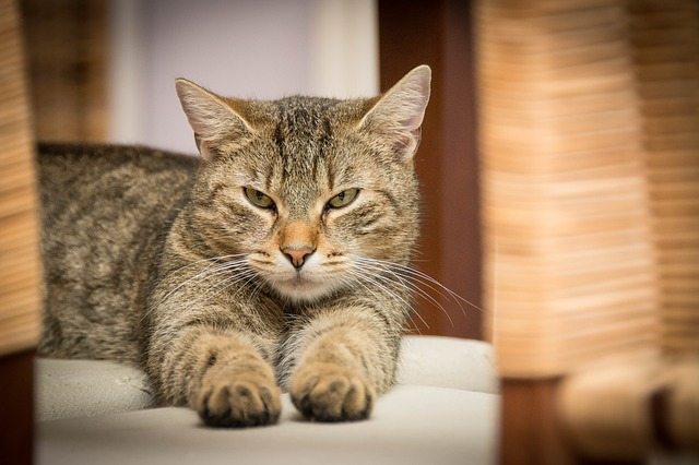 Litter box options for a working mom